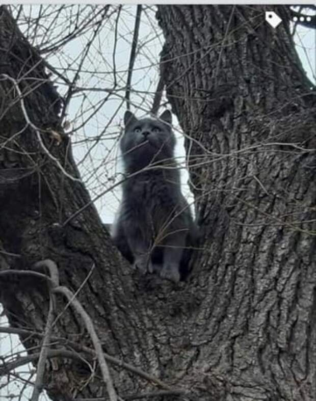 кошка на дереве