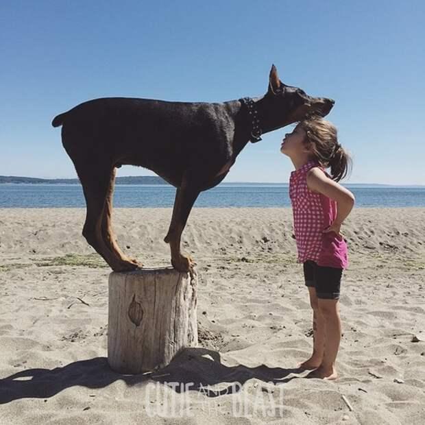 Мама девочки говорит, что люди зря считают доберманов грубыми и злыми собаками.
