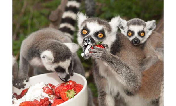 20 животных, поедающих фрукты и ягоды, которые выглядят как кровожадные монстры животное, фрукт, ягода