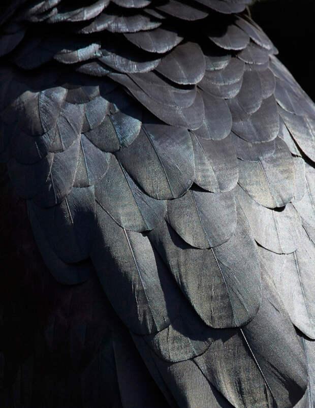 Томас Лор о красоте птиц