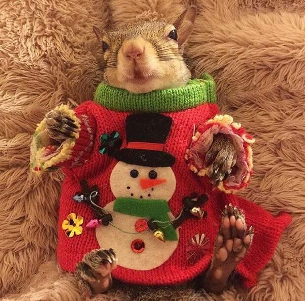 Белка. Новогодняя. В свитере.