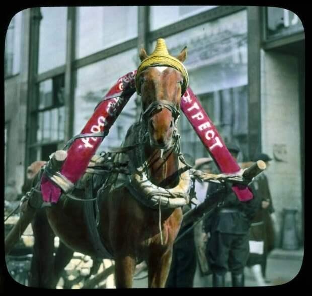 Лошадь на московской улице
