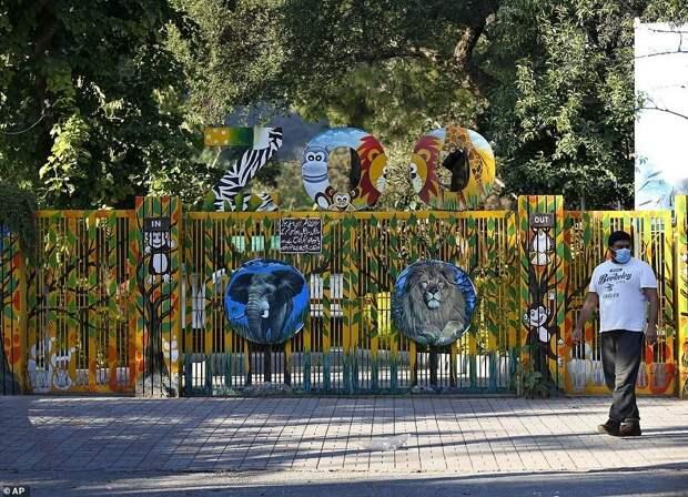 Закрылся адский зоопарк, где жил «самый одинокий вмире слон»