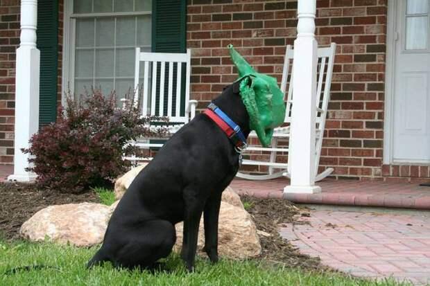 собаки, сделавшие неправильный выбор