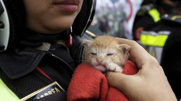 Police officer Gisella Baigorrea with rescued kitten Joel