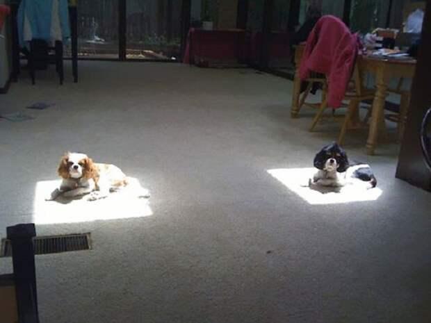 Тебе кусочек солнечного света и мне.