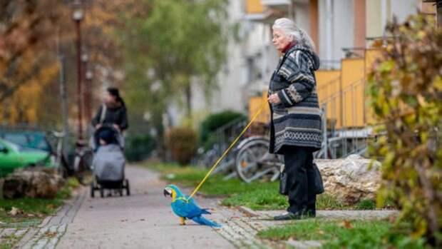 В Тюрингии бабушка Хильде каждый день выгуливает на поводке необычного питомца