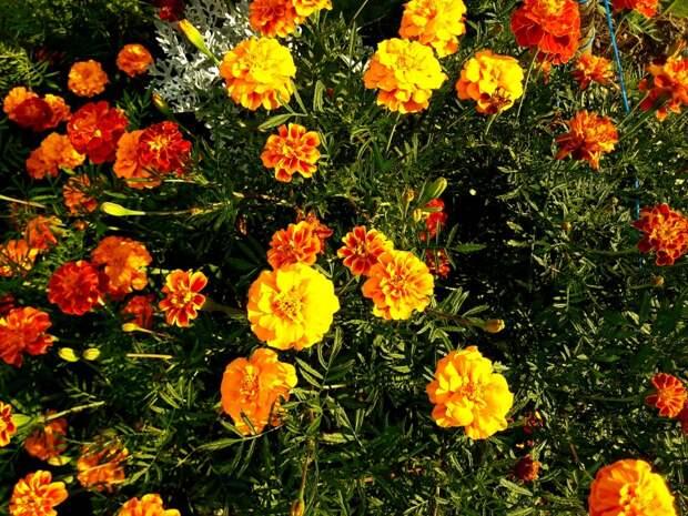Много летних цветов в последний день августа