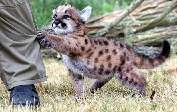 милые животные  у которых не получилось выглядеть устрашающе (7)