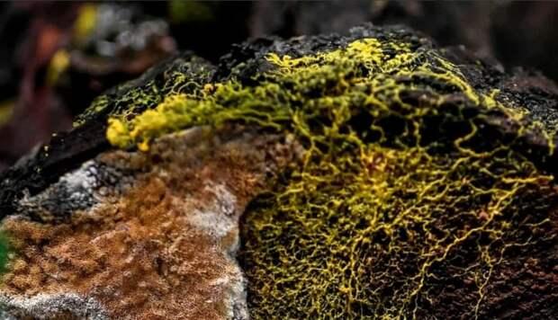 Парижский зоопарк представил «слизь»: гриб, животное или растение