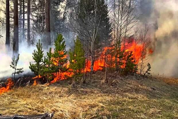 Сибирские ученые научились обнаруживать лесные пожары на ранних стадиях