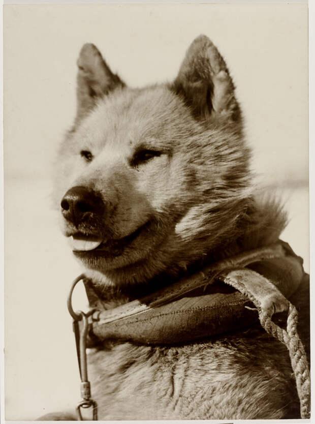 Первая Австралийская антарктическая экспедиция в фотографиях Фрэнка Хёрли 1911-1914 23
