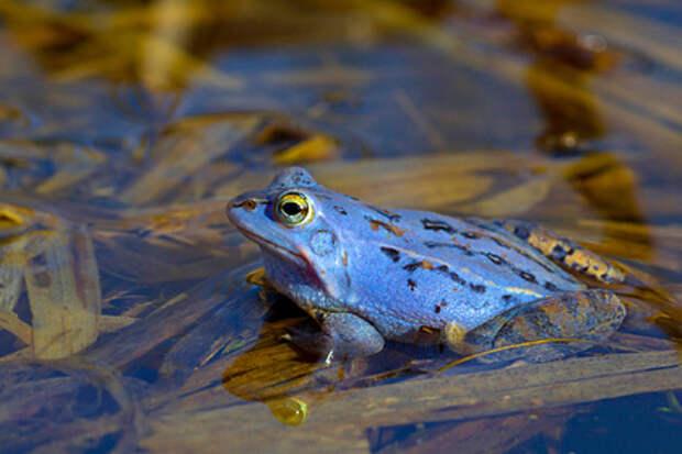Подростки заставили лягушку стать голубой