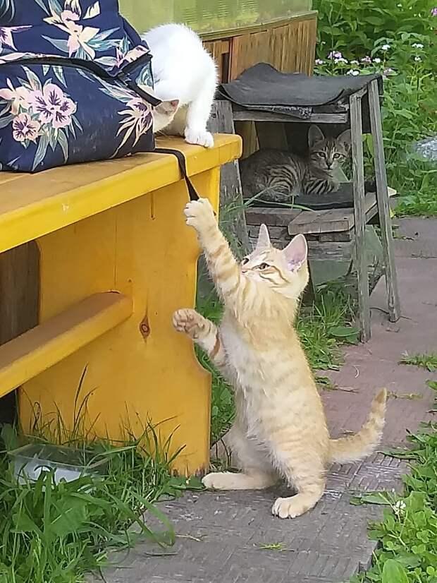 Пропадают котята... Может вы готовы приютить их на время или навсегда?