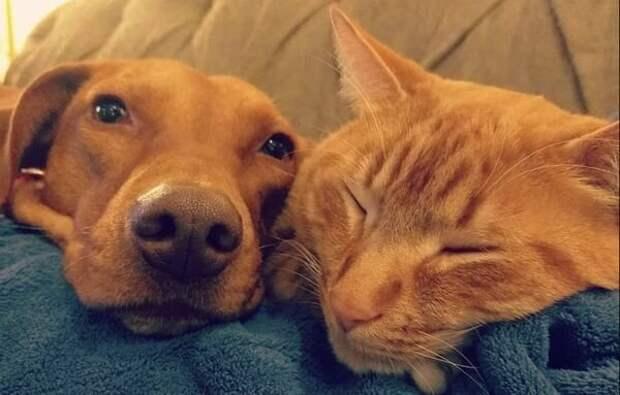 Тайная жизнь домашних животных: что делали собака и кошка без ...