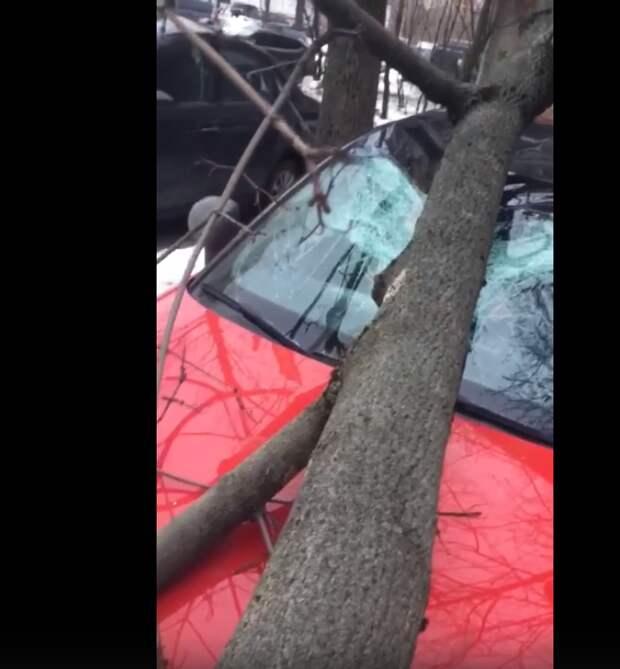 На Академика Комарова дерево упало на автомобиль