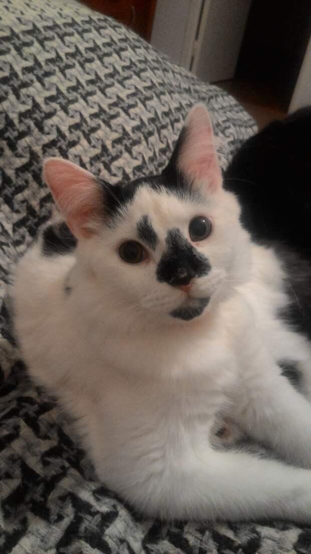Кота выгнали из дома за плохое поведение, но нашелся человек, который полюбил питомца со всеми его недостатками