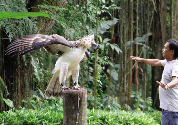 Обезьяноед: Гигантский орёл против приматов. Как охотится птица с «особым» рационом?
