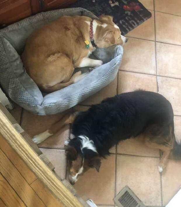 Собаки лежат