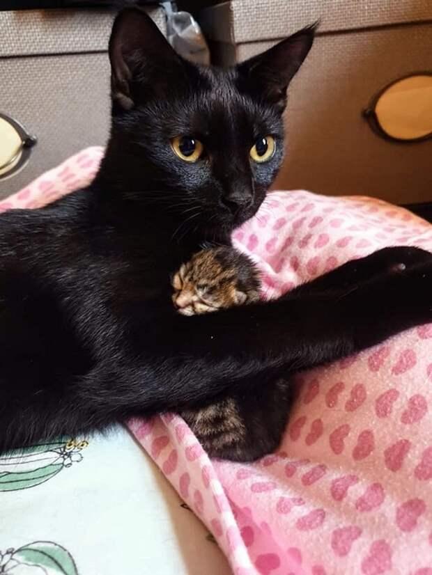 Котенок, который умещался в ладошке, боролся за жизнь, и в этом ему помогала четвероногая подруга