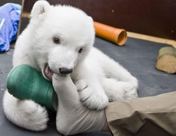 милые животные  у которых не получилось выглядеть устрашающе (16)