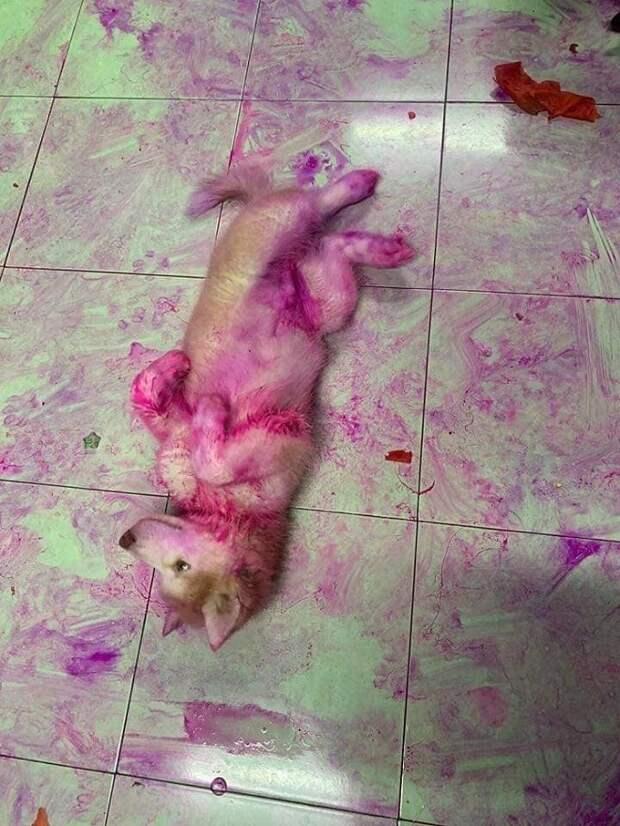 Зайдя в кухню, хозяйка ахнула: две собачки были выкрашены в пурпурный цвет, а кухня напоминала поле боя