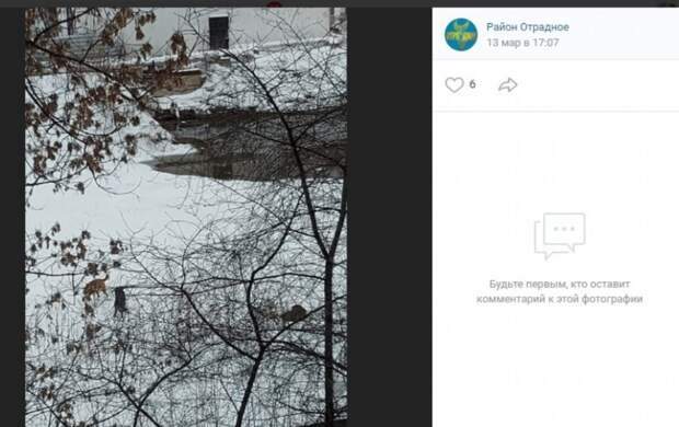 Фото: скриншот записи в сообществе «Район Отрадное» Вконтакте