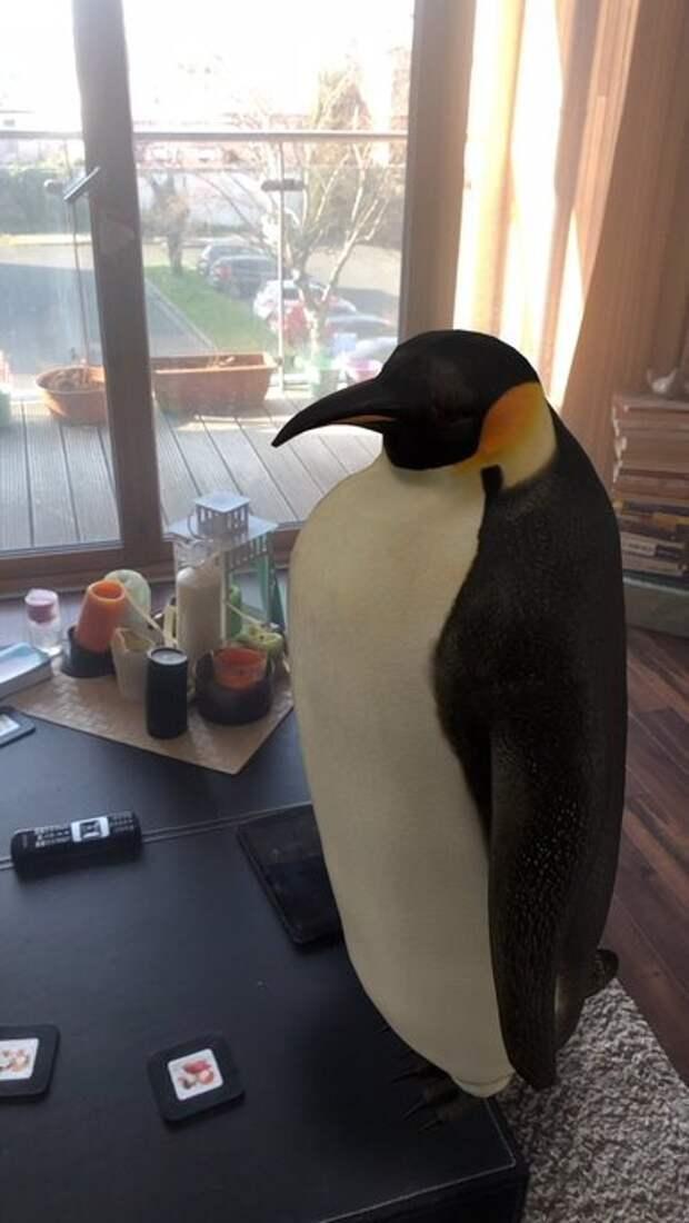 Любимые животные в формате 3D: Google дает возможность увидеть проекцию зверей в доме