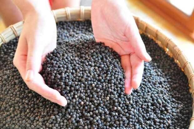 Черный перец – энергетический продукт, который дарит здоровье! Восточная медицина советует - лечение черным перцем