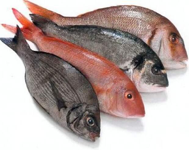 Полезные советы при обработке рыбы