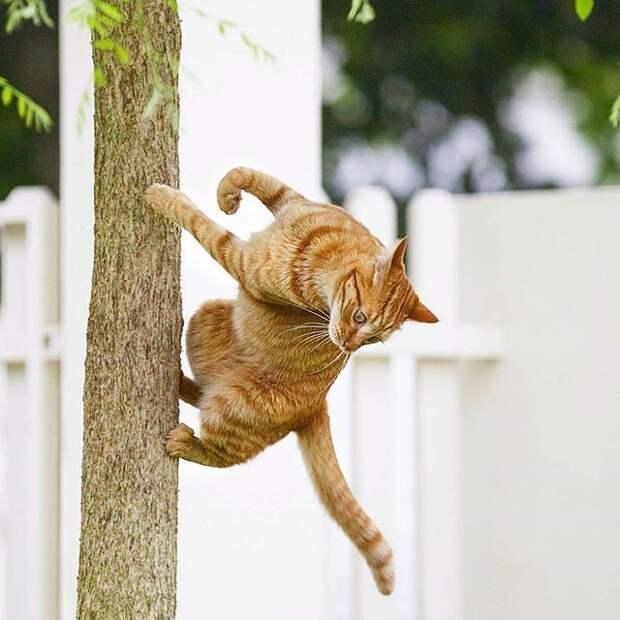 Веселые фотографии и картинки с надписями про котиков