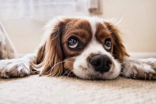В США сообразительность собаки спасла жизнь ее хозяйке