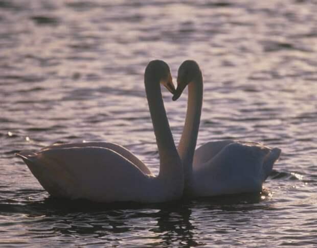 15 фото нежных пар, которые заставят вас поверить в любовь