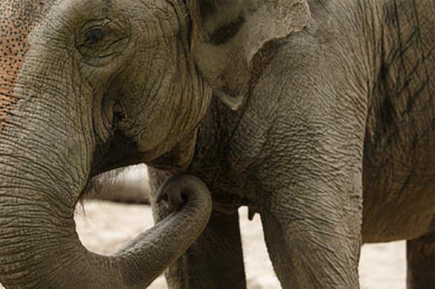 Разъяренные слоны растоптали собиравшую травы в лесу женщину