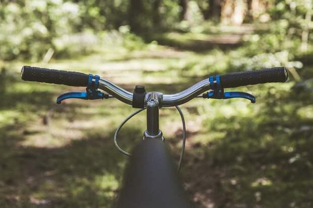 Что полезнее для организма: бег, плавание или велосипед?