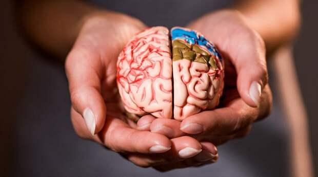 7 продуктов, которые вредят вашему мозгу