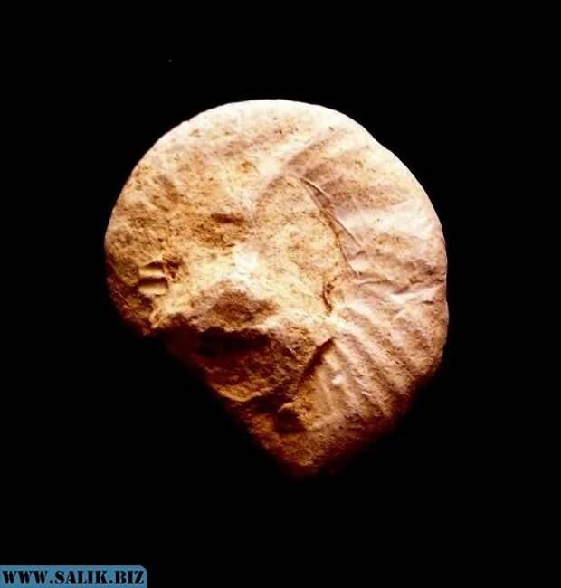 Древнейший артефакт. 100 миллионов лет