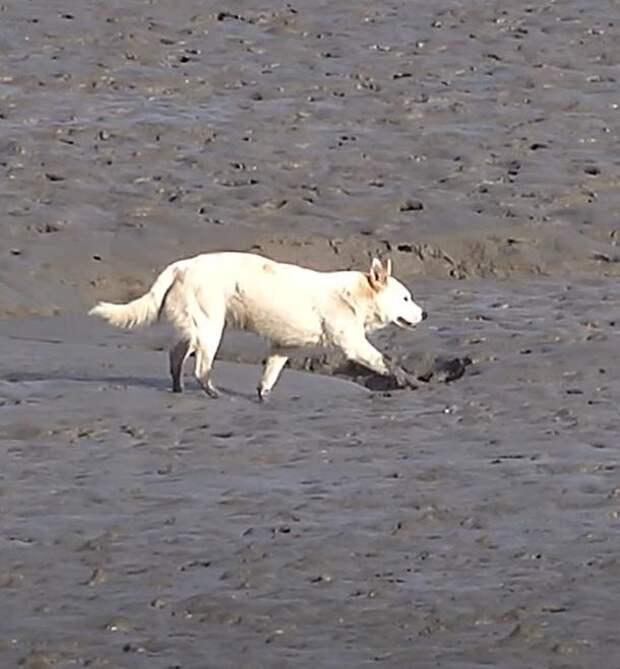 Собака выживала на безлюдном острове совсем как Беар Гриллс