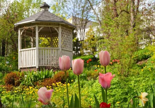 В Ботаническом саду ТвГУ прозвучат песни русской глубины