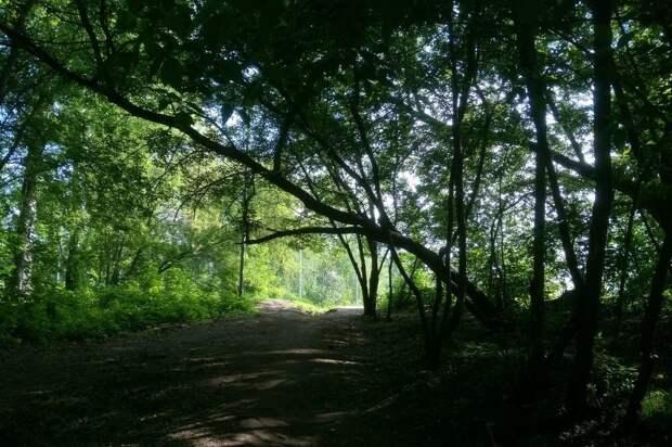 В Ижевске определят коридоры для проезда тяжелой техники к стройплощадкам вблизи леса на улице 40 лет Победы