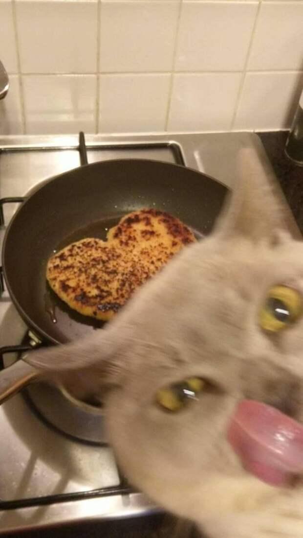 Кот и стейк
