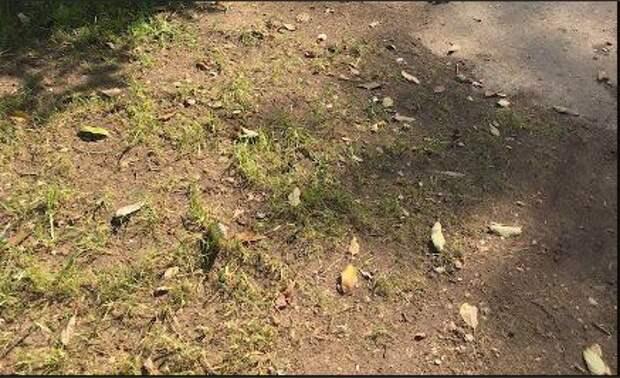 Автохамы погубили газон на Дубравной