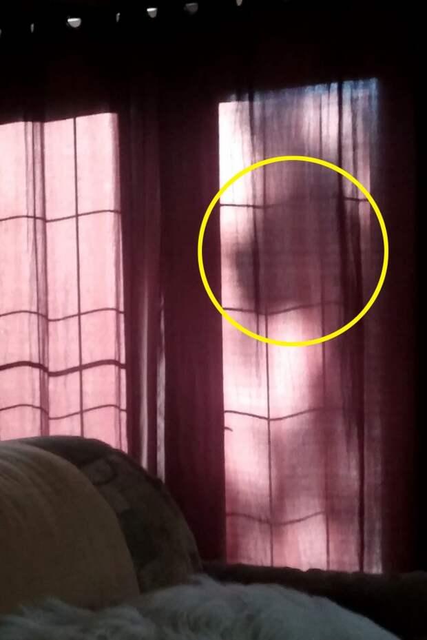 Женщина сфотографировала призрак своей собаки за занавеской! Ушедший пёс был по-прежнему рядом