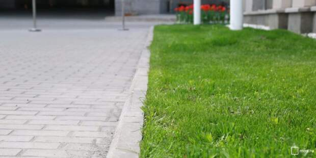 Коммунальщики очистили газон на Скаковой
