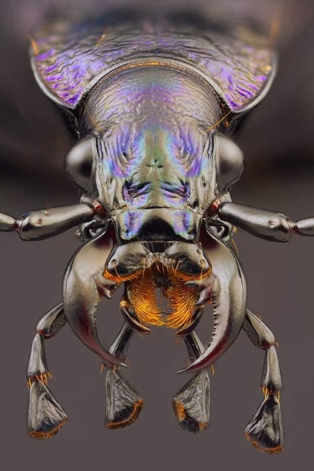 Умудренные жизнью жуки виды, красиво, лица, насекомые, природа, фото