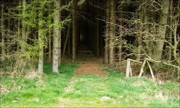 В лес я больше ни ногой