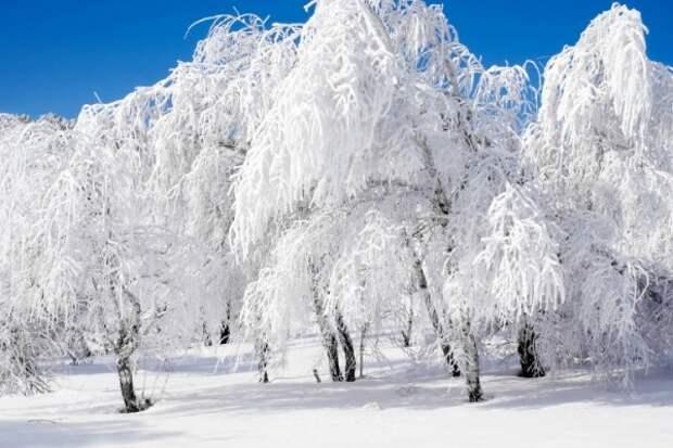 Снегопад в конце зимы…