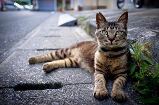 Непростая жизнь Мишки — единственной кошки-уголовницы америка, интересное, кошки, преступница, юмор