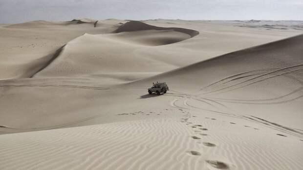 Британские археологи нашли новый вид беззубых динозавров в пустыне Гоби