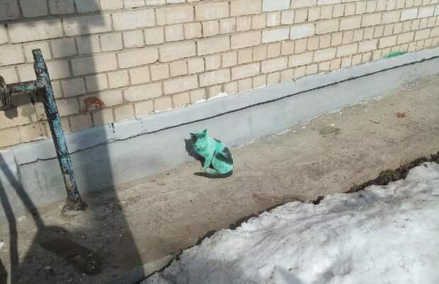 Фото дня: в Дзержинске нашли зелёного кота